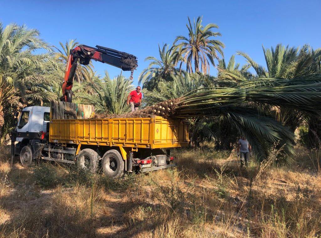 camion remolcando palmera