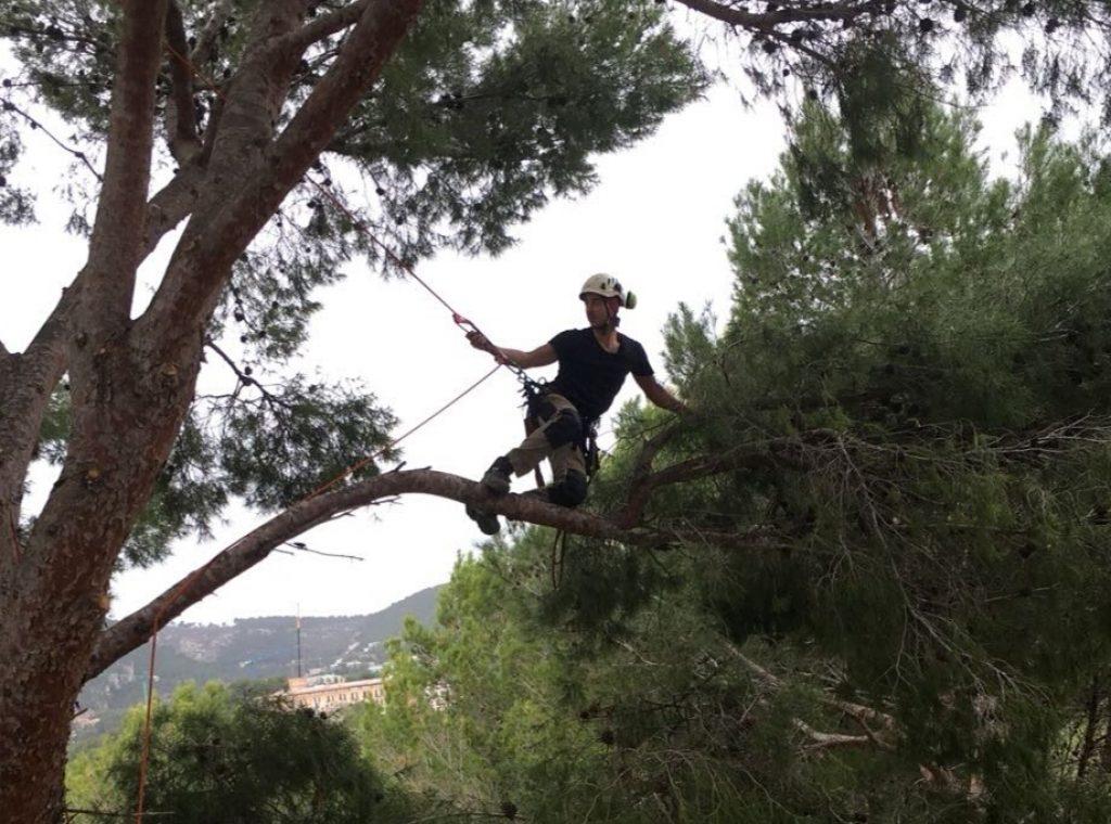 Hombre podando un arbol con arnés